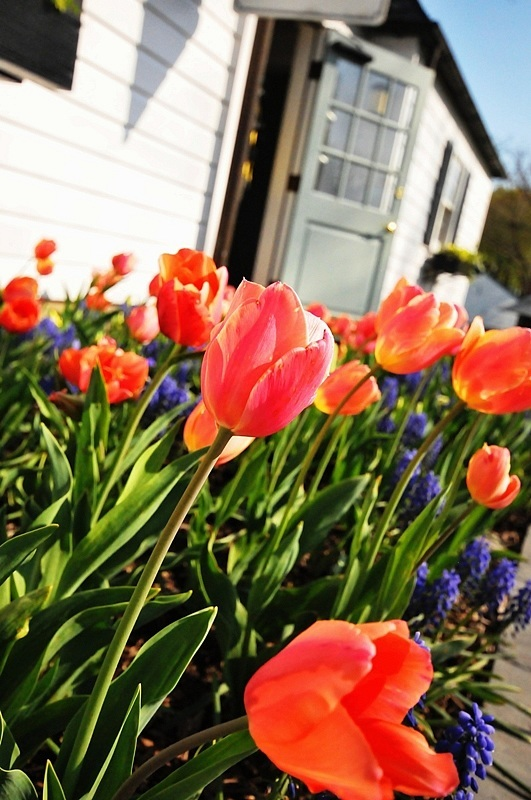Postcard: Spring Is In The Air