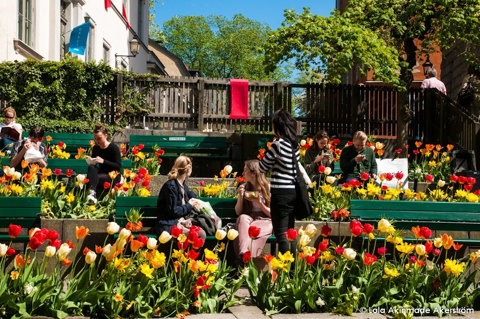 Tulip festival in Stockholm, Sweden - Spring Flower Photography by Lola Akinmade Åkerström