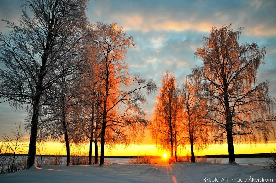 Postcard: Ice-covered trees on a sunny day in Sweden # ...