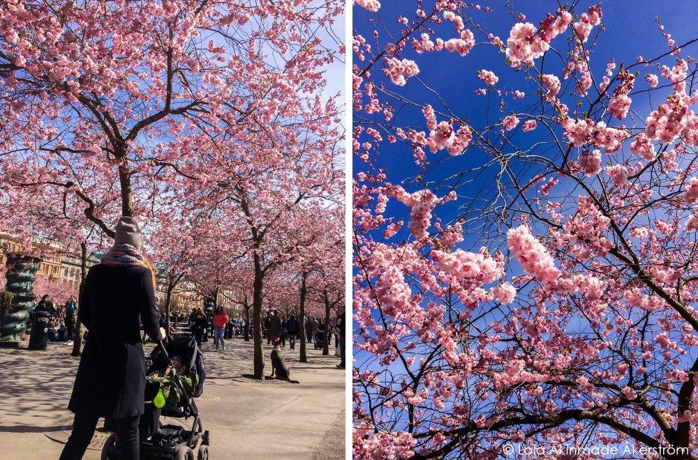 Lola_Akerstrom_CherryBlossoms_001