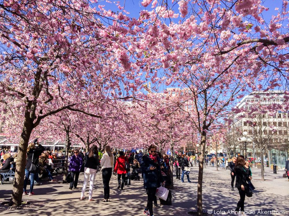 Lola_Akerstrom_CherryBlossoms_011