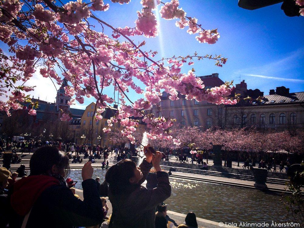 Lola_Akerstrom_CherryBlossoms_015