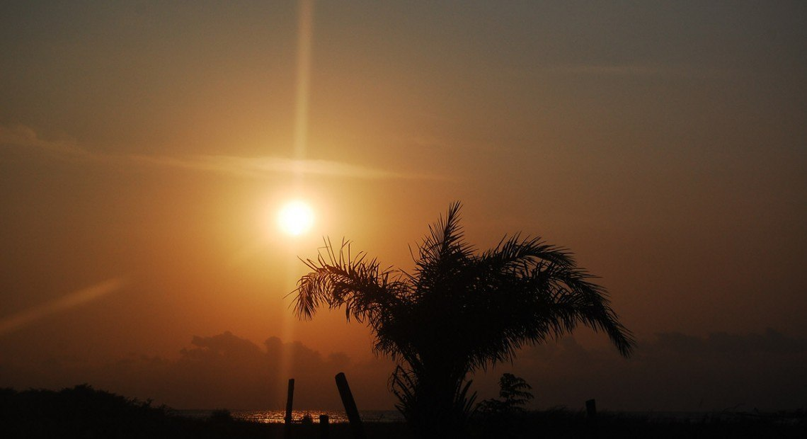 Postcard: Palm trees at sunset in Lagos