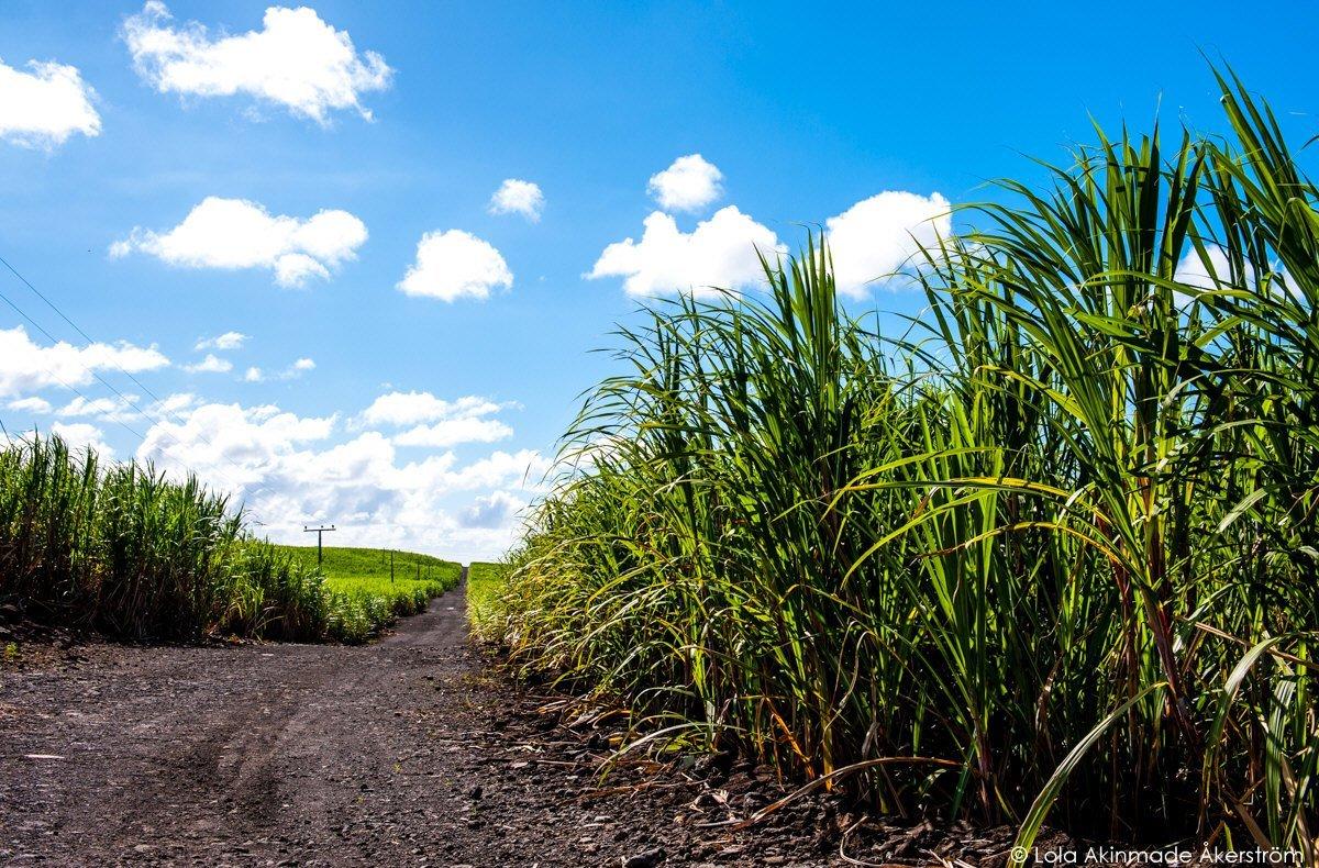 Landscape photos of Mauritius. Mauritius_1116