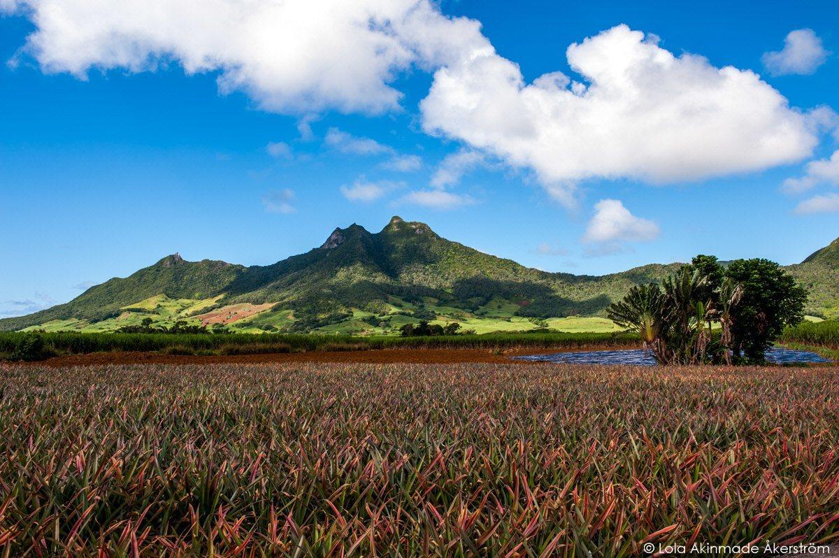 Mauritius_1248