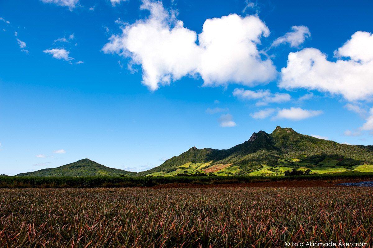 Landscape photos of Mauritius. Mauritius_1252