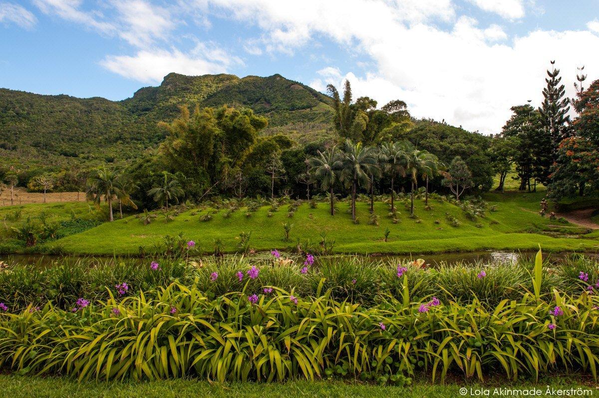 Mauritius_1374