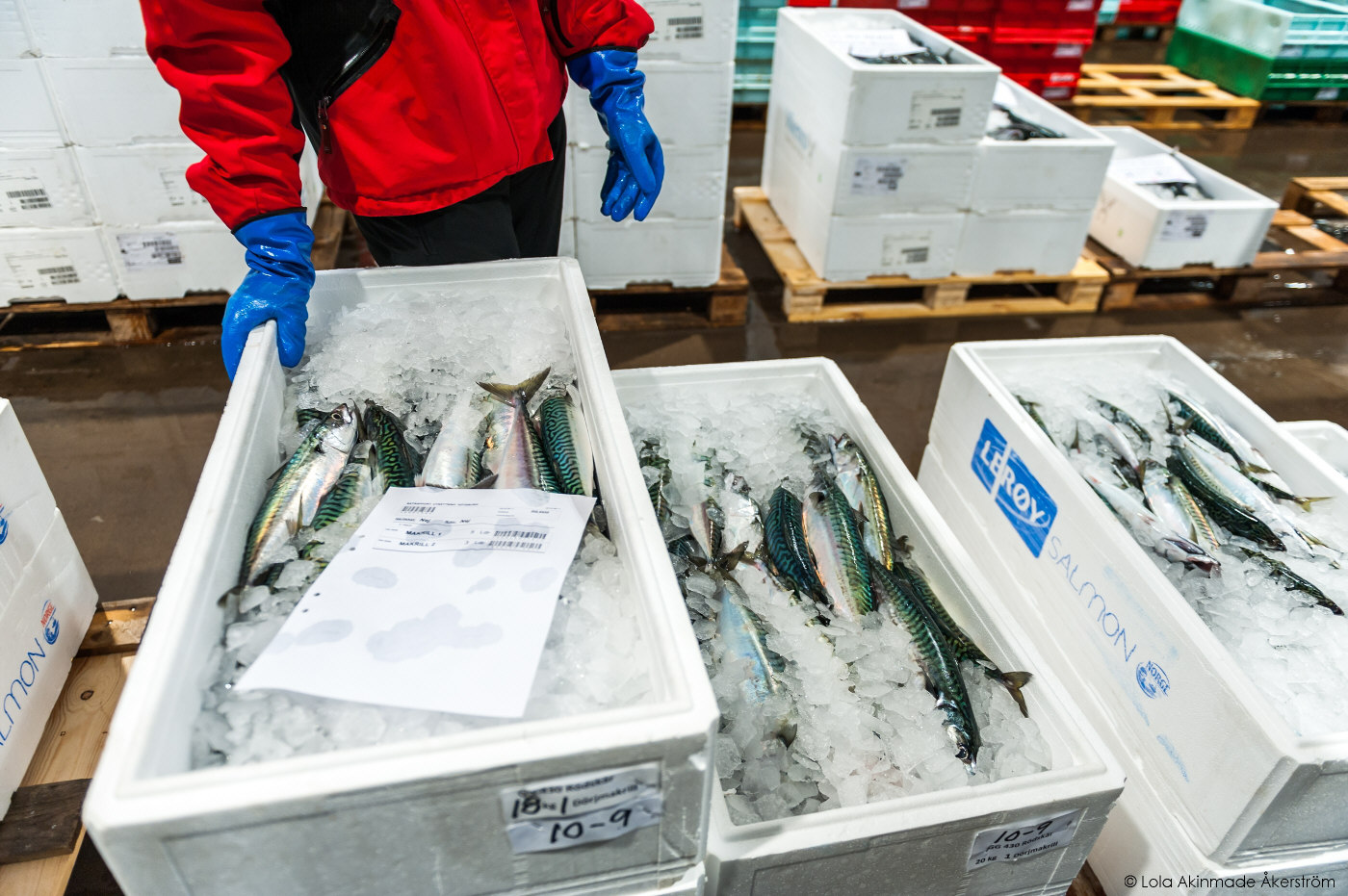 Photos from the Gothenburg Fish Auction
