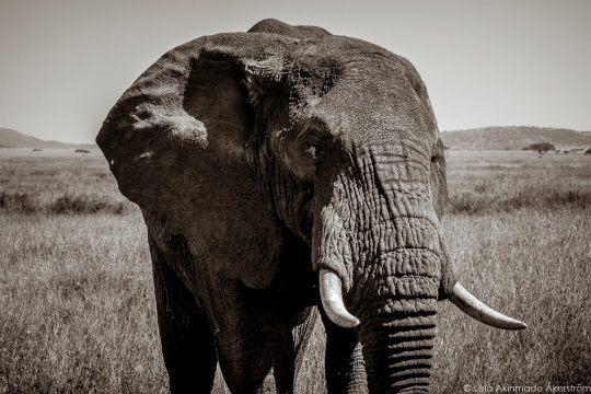 The Serengeti in black and white